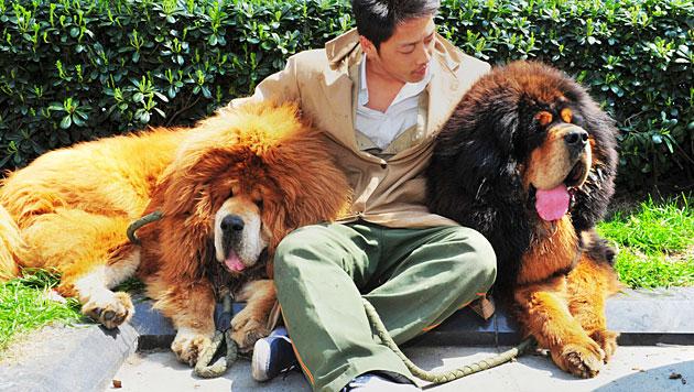 Chinese zahlt für jungen Hund 1,4 Millionen Euro (Bild: AFP)