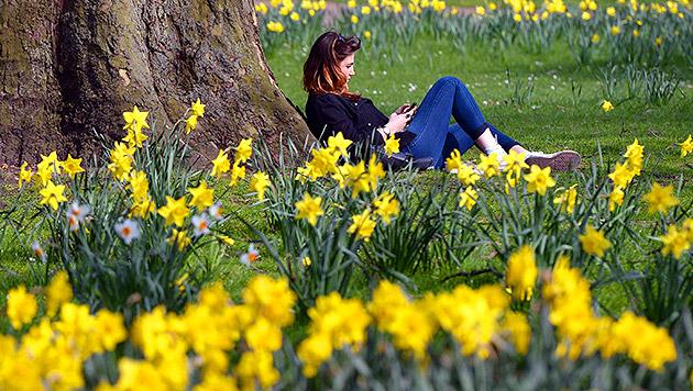 Nach kühlem Wochenende kehrt Frühling zurück (Bild: EPA/Andy Rain, krone.at-Grafik (Archiv))
