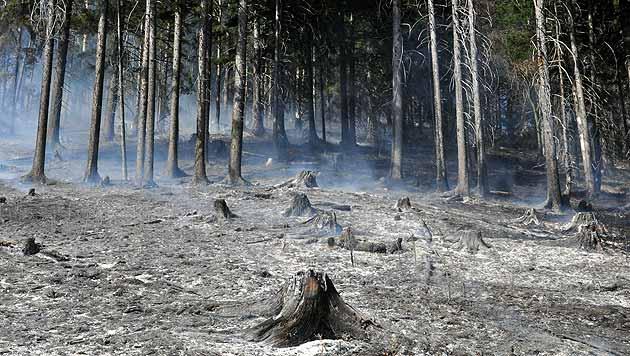 Waldbrand in NÖ nach rund 24 Stunden gelöscht (Bild: APA/BFKDO LILIENFELD/SB THOMAS T)
