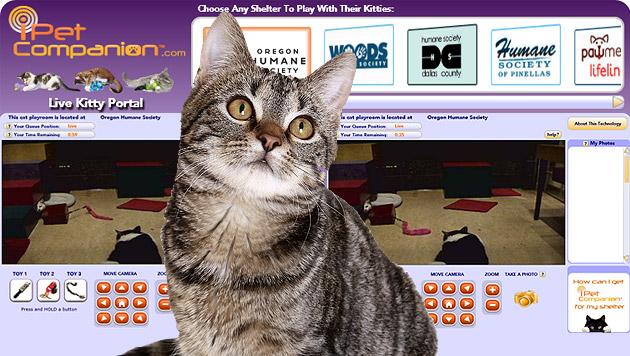 website l dt zum online spiel mit katzen ein ipet companion digital. Black Bedroom Furniture Sets. Home Design Ideas