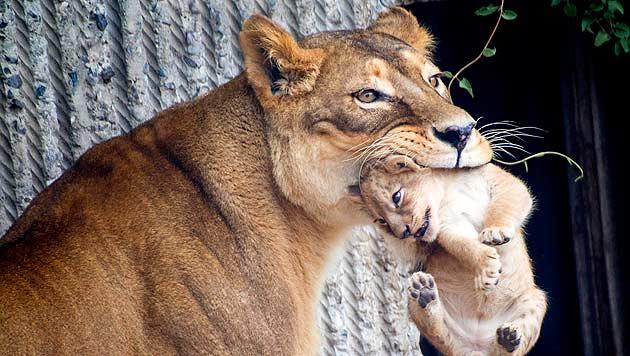 """""""Die Leute machen die Tiere zu kleinen Menschen"""" (Bild: APA/EPA/MADS NISSEN)"""