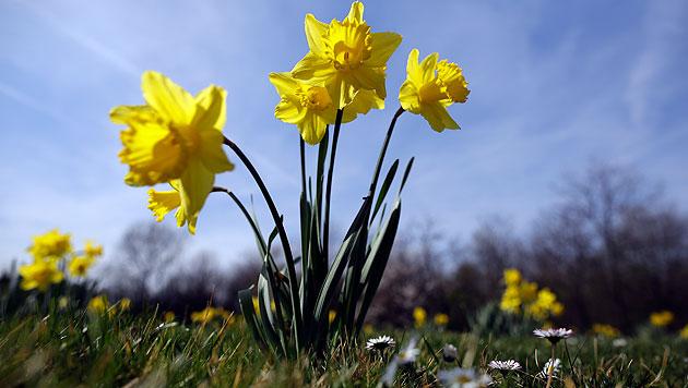 Mit viel Sonnenschein in Richtung Frühlingsbeginn (Bild: APA/GEORG HOCHMUTH (Symbolbild))