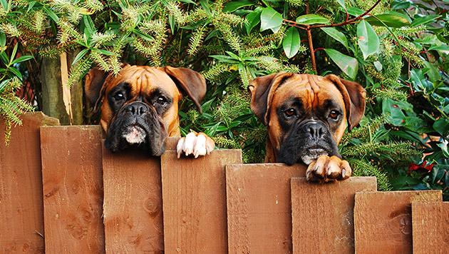 Gartenfreuden für Mensch und Hund (Bild: Fotolia)