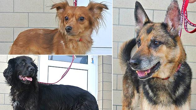 Liah (oben links), Pablo (unten links) und Rita (rechts) wurden ausgesetzt. (Bild: Tierheim Dechanthof)