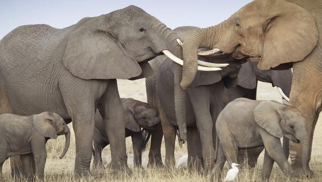 Handel mit illegalen Tierprodukten im Netz blüht (Bild: EPA)