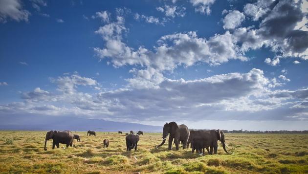 Tansania: Wilde Tiere, weißer Sand (Bild: EPA)