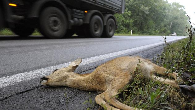 81.000 Wildtiere starben 2013 im Straßenverkehr (Bild: APA/HARALD SCHNEIDER)