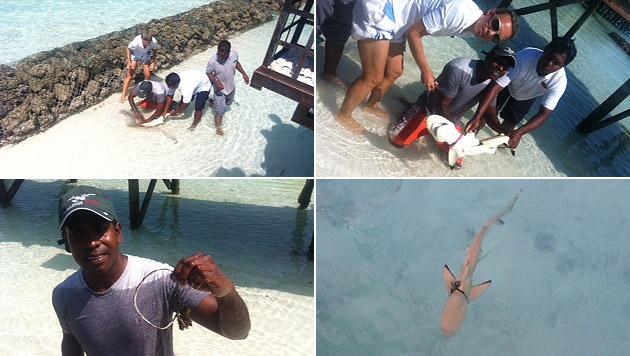 Im Urlaub entdeckte ich einen Hai, in dessen Körper ein Seil eingewachsen war. Er wurde gerettet! (Bild: Halaveli Maldives)