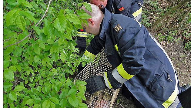 Florianis begaben sich in NÖ auf Gänsefang (Bild: Hubert Wagner / Freiwillige Feuerwehr Unterwaltersdorf)