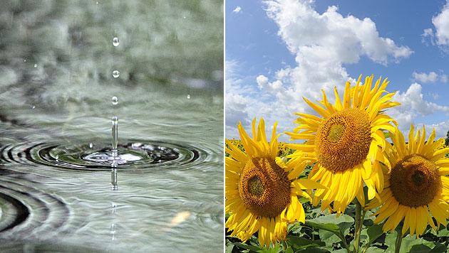 Wetter bleibt auch weiterhin wechselhaft (Bild: dpa-Zentralbild/Jan Woitas, Bernd Settnik)