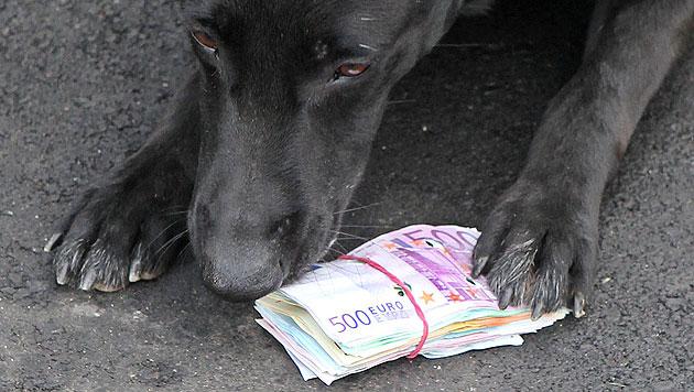 Die Nasen heimischer Zollhunde spüren auch Bargeld auf. (Bild: Jürgen Radspieler (Symbolbild))