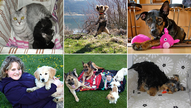 Wir suchen Ihr schönstes Haustierfoto (Bild: Zardini, Reinisch, Huber, Pirkner, Pregl)