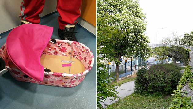 Wien: Hund entdeckt Neugeborenes in Gebüsch (Bild: Polizei, Zwefo)