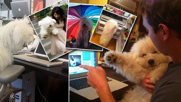 """Beast"": So lebt der Hund des Facebook-Schöpfers (Bild: facebook.com/beast.the.dog, krone.at-Grafik)"