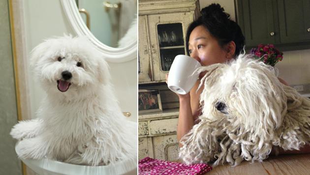 Beast hat sich in den letzten Jahren vom flauschigen Fellknäuel zum Rasta-Zottelhund entwickelt. (Bild: facebook.com/beast.the.dog)