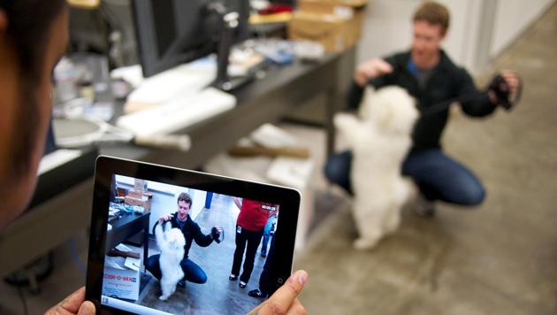 Wenn Beast mit Herrchen im Facebook-Büro weilt, muss auch mal Zeit für ein Kunststück sein. (Bild: facebook.com/beast.the.dog)
