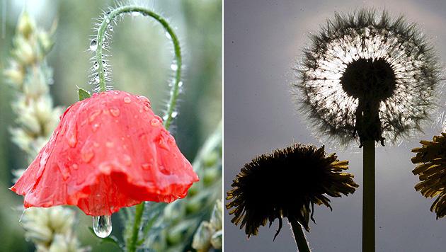 Regen und Schnee: April bleibt unbeständig (Bild: Frank Rumpenhors /EPA/picturedesk.com)