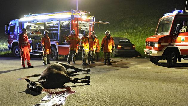 Frei laufendes Pferd bei Kollision mit Pkw getötet (Bild: APA/MANFRED FESL)
