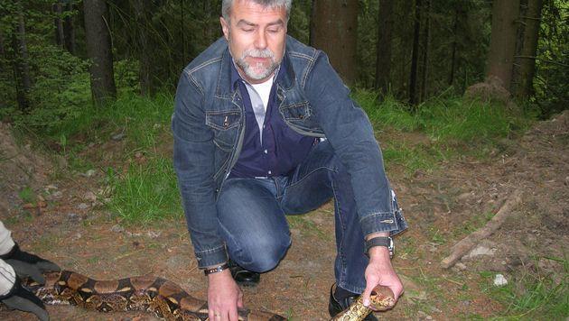 """Reinhold Petz fixierte die Schlange, ehe sie sicher verpackt wurde. (Bild: """"Krone"""")"""