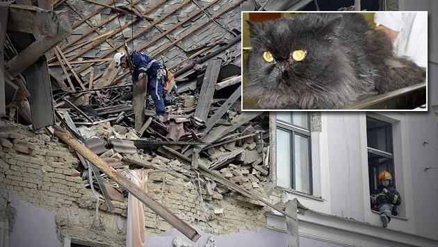 """Kater """"Sam"""" nach sechs Tagen aus Trümmern gerettet (Bild: APA/HERBERT P. OCZERET, APA/WIENER TIERSCHUTZVEREIN)"""