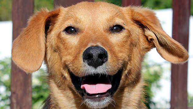 """Für """"Viva"""" wird dringend ein Pflegeplatz gesucht. (Bild: Animal Care International)"""