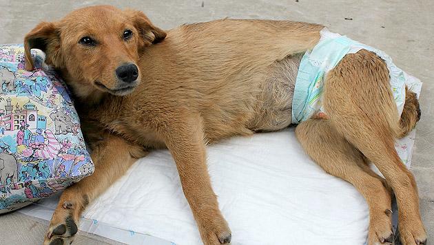 """""""Viva muss einfach eine Chance bekommen"""", so Renate Grell von ACI. (Bild: Animal Care International)"""