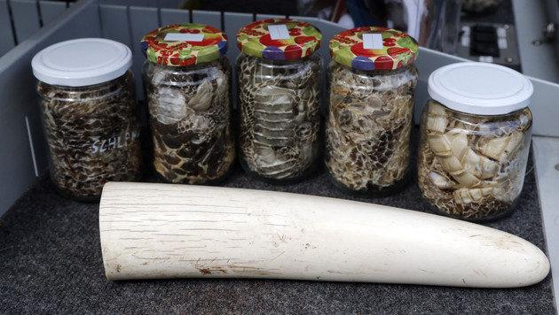 Unter der Schmuggelware finden sich Schlangen, Nashhorn-Horn und Co. (Bild: Zwefo)