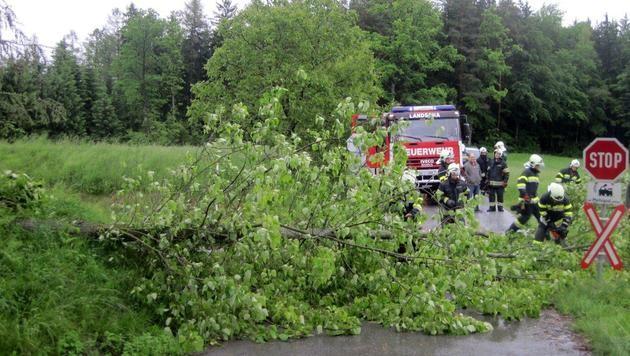 Einsatzkräfte räumen in der Steiermark umgestürzte Bäume weg. (Bild: LFV Steiermark)