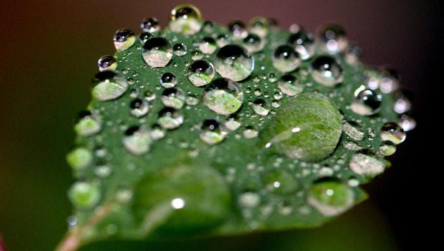 Regen kommt auf Landesnorden und -osten zu (Bild: dpa-Zentralbild/Ralf Hirschberge)