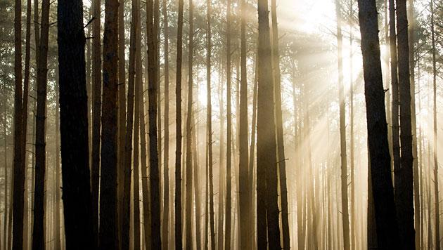 Wälder weniger effektiv gegen Klimawandel (Bild: APA/dpa-Zentralbild/Patrick Pleu)