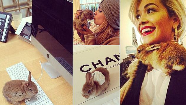 "So herzig ist Cara Delevignes kleiner Hase ""Cecil"" (Bild: instagram.com/cecildelevingne)"