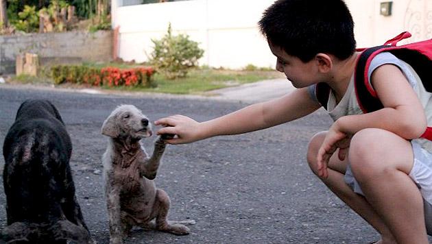 Ken liebt Hunde über alles. Sein größter Traum: ein eigenes Tierheim. (Bild: happyanimalsclub.org)