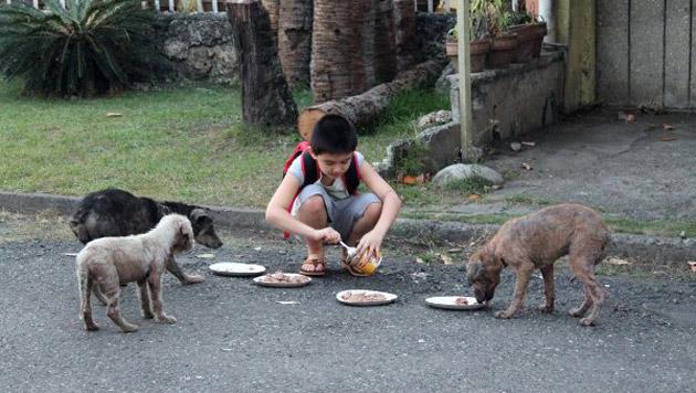 Der kleine Junge versorgt die Streuner mit hochwertigem Hundefutter und bringt sie zum Tierarzt. (Bild: happyanimalsclub.org)