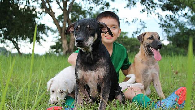 Ken pflegt die Streunerhunde gesund und kümmert sich um sie. (Bild: happyanimalsclub.org)