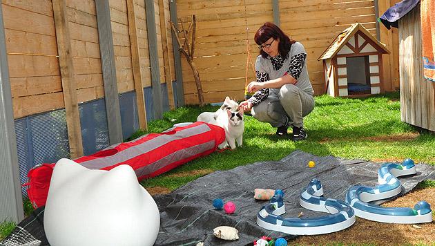Lienzer Tierschutzverein: Freude über Freigehege (Bild: Martina Holzer)