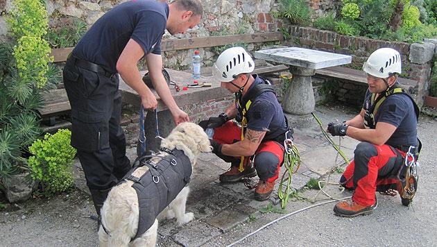 Florianis retten Golden Retriever aus Steilhang (Bild: BF Graz)