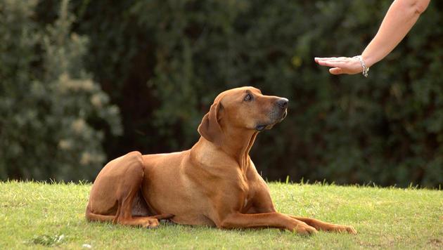 Hundetrainer setzen auf Herz und Hirn statt Drill (Bild: thinkstockphotos.de (Symbolbild))
