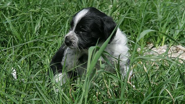 So schützen Sie Ihr Haustier vor Mähunfällen (Bild: Pfotenhilfe)