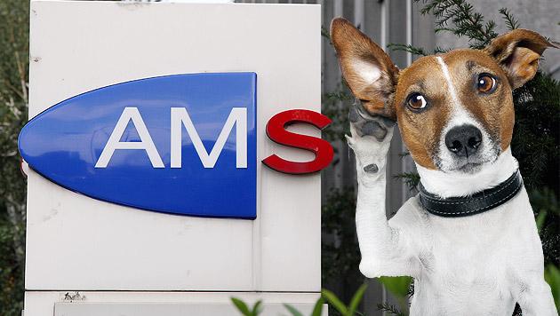 "AMS fragt bei Kursen: ""Ist Hundebellen Arbeit?"" (Bild: Peter Tomschi, thinkstockphotos.de, krone.at-Grafik)"