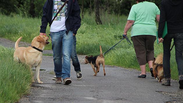 Mensch-Hund-Teams holten sich den Hundeführschein (Bild: Wiener Hundekompetenzzentrum)