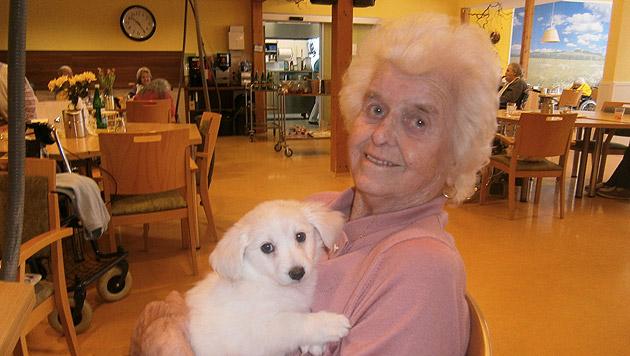 Senioren erfreuen sich an tierischen Weggefährten (Bild: SeneCura)