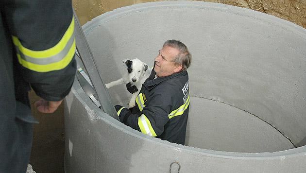 Der kleine Hund konnte von den Einsatzkräften aus dem Brunnenschacht geborgen werden. (Bild: FF Heiligeneich)