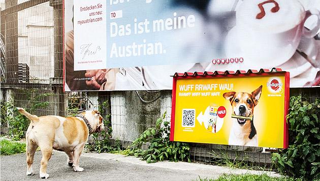 Wien: Erstes Werbeplakat für Hunde verströmt Duft (Bild: PKP BBDO/Gewista)
