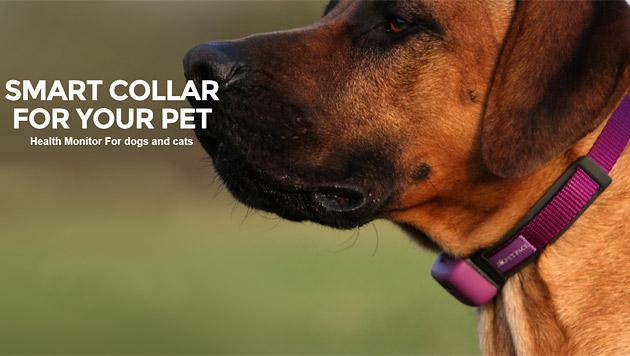 """Petpace"": Smartes Halsband für Hunde und Katzen (Bild: petpace.com)"