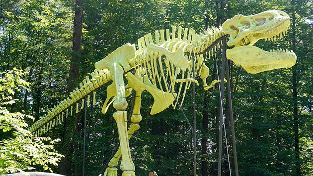 """""""Styrassic Park"""" zeigt einzigartiges T-Rex-Skelett (Bild: APA/STYRASSIC PARK)"""