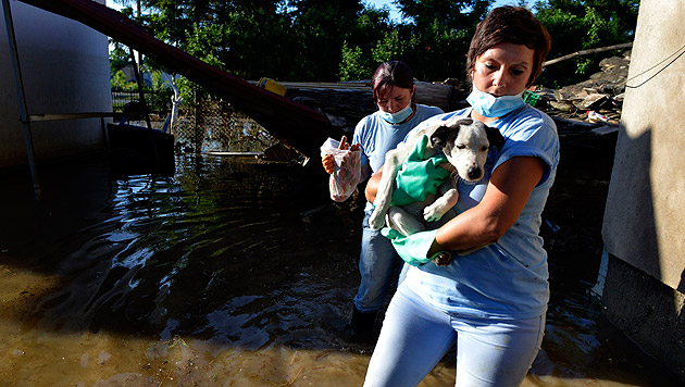 Serbien: Tierschützer weiter im Hochwasser-Einsatz (Bild: Vier Pfoten/Elisabeth Blum)