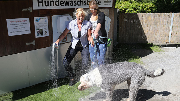 """Bobtail """"Ozzy"""" und seine Frauerln Sabine und Lisa sind gleichermaßen nass. (Bild: Sepp Pail)"""