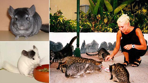 Tierfreundin in Not sucht Plätze für Chinchillas (Bild: Sabine Rudorfer)