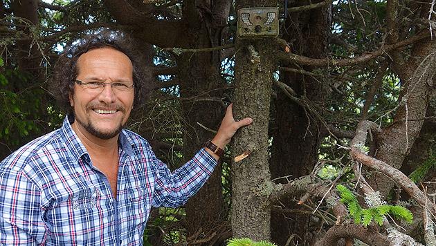 """""""Aktuell häufen sich Meldungen von Wölfen in Kärnten"""", so Landeszoologe Bernhard Gutleb. (Bild: Hannes Wallner)"""