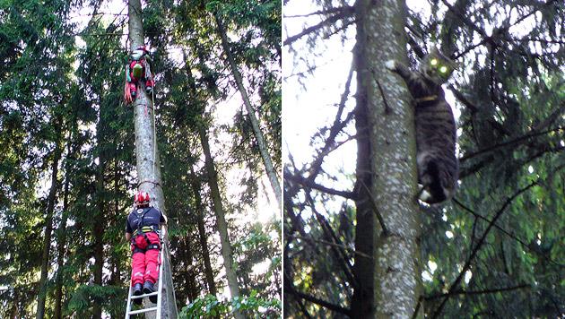 OÖ: Höhenretter sprang Katze von Baum zu Baum nach (Bild: FF Frankenmarkt)